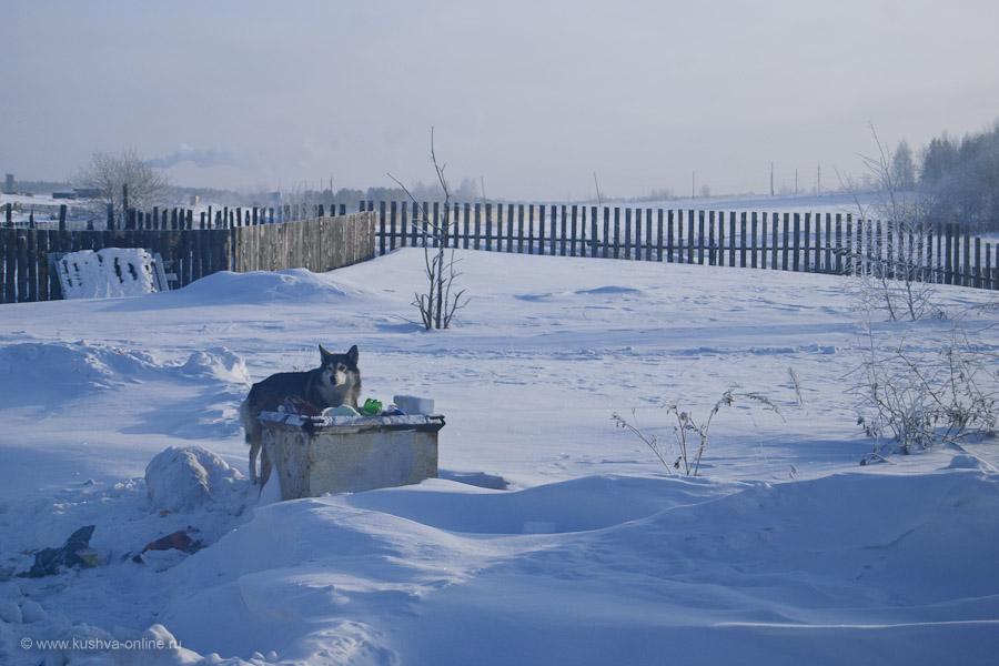 Фото дня от 22 января 2011 г. г. Автор: Александр Скрябин