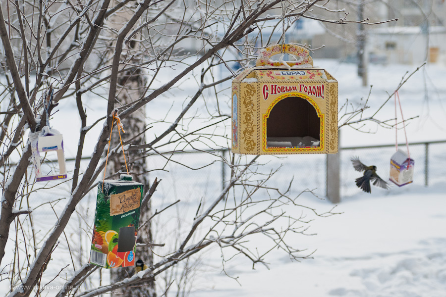 Фото дня от 24 января 2011 г. г. Автор: Александр Скрябин