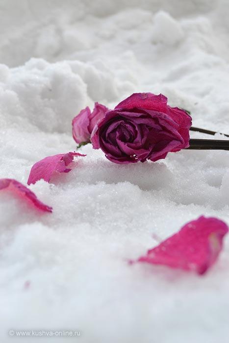Фото дня от 9 февраля 2011 г. г. Автор: Ксюша Фирсова