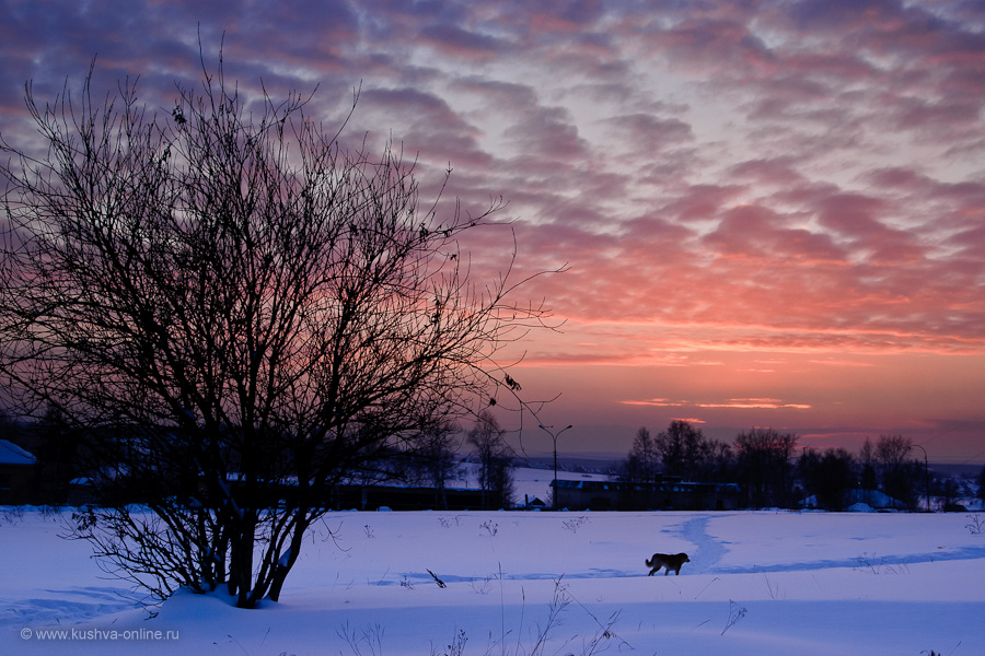 Фото дня от 13 февраля 2011 г. г. Автор: Александр Скрябин