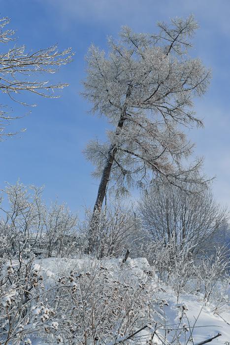 Фото дня от 22 февраля 2011 г. г. Автор: Александр Скрябин
