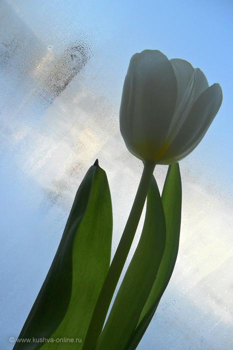 Фото дня от 10 марта 2011 г. г. Автор: Екатерина Трофимова