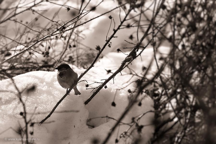 Фото дня от 25 марта 2011 г. г. Автор: Александр Скрябин