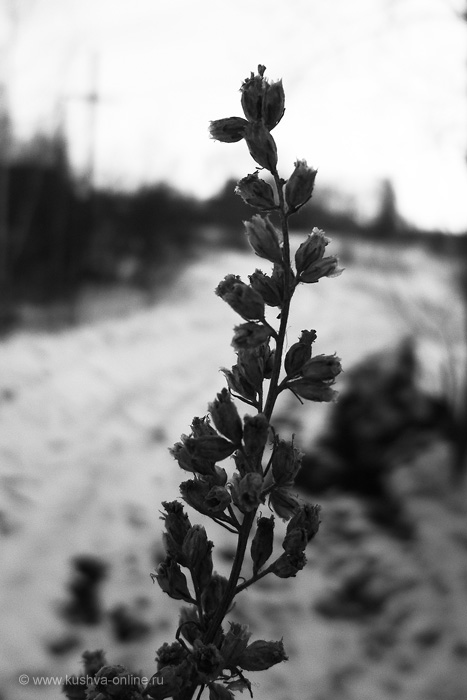 Фото дня от 26 марта 2011 г. г. Автор: Дима Ахтямов