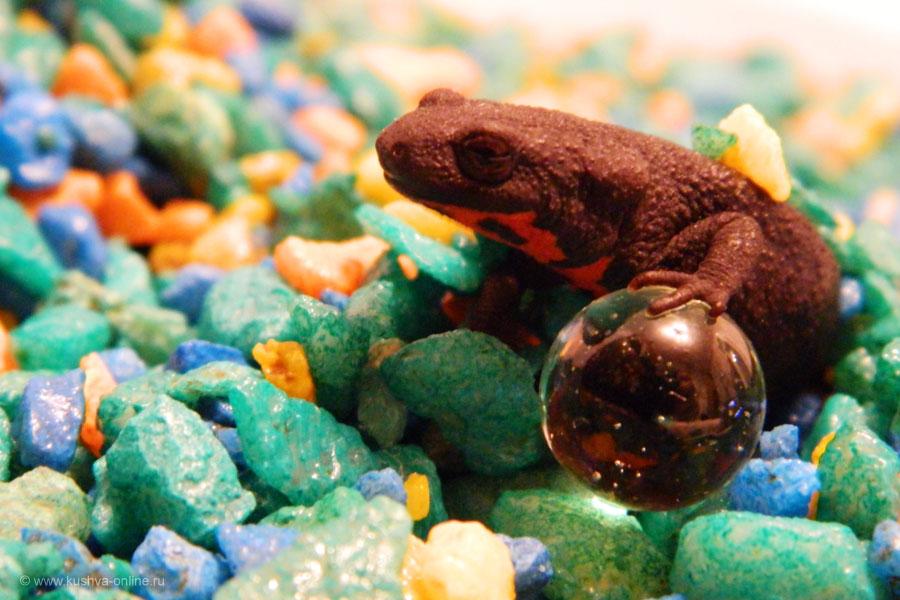 Фото дня от 12 апреля 2011 г. г. Автор: Frostbite