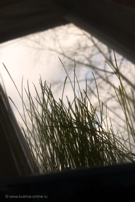 Фото дня от 16 апреля 2011 г. г. Автор: Ангелина Шаля