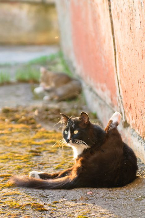 Фото дня от 15 мая 2011 г. г. Автор: Марина Варфоломеева