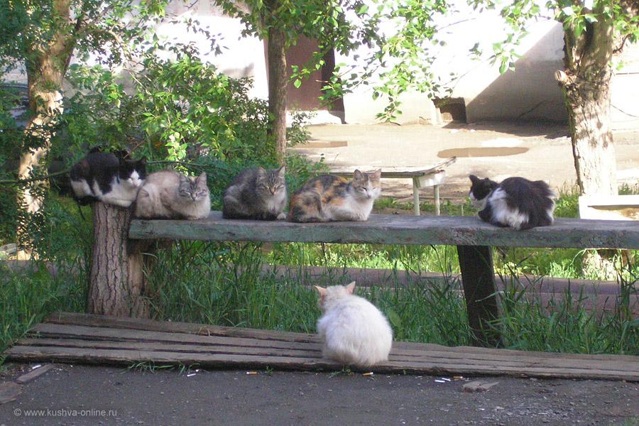 Фото дня от 17 июня 2011 г. г. Автор: Катюшка Кузовникова