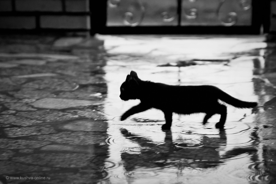Фото дня от 26 июля 2011 г. г. Автор: Александр Скрябин
