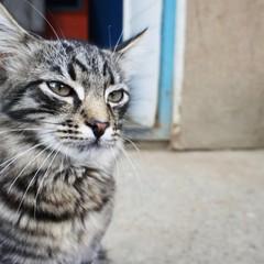 Просто очаровательный котэ! © Frostbite