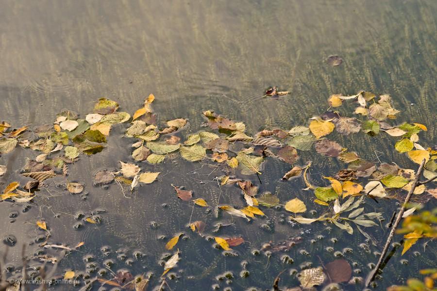 Фото дня от 5 сентября 2011 г. г. Автор: Александр Скрябин