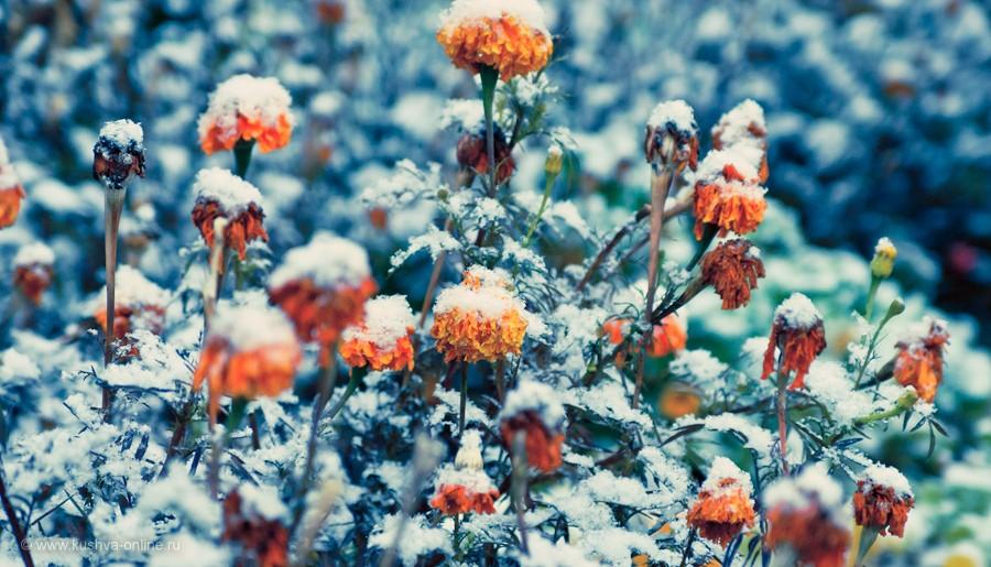 Фото дня от 27 октября 2011 г. г. Автор: Александр Скрябин