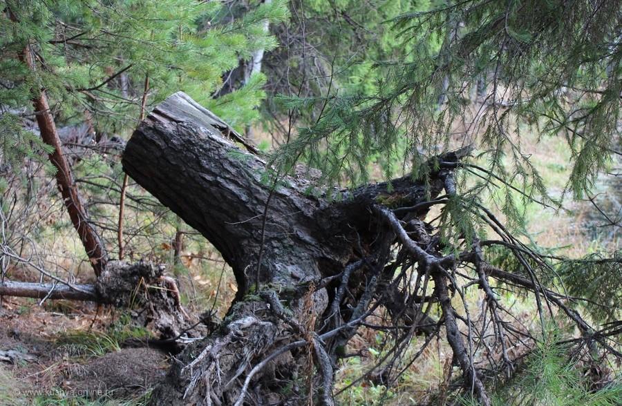 Фото дня от 18 октября 2011 г. г. Автор: Аня