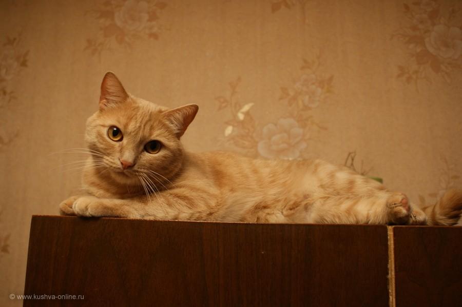 Фото дня от 28 октября 2011 г. г. Автор: Елена Строганова