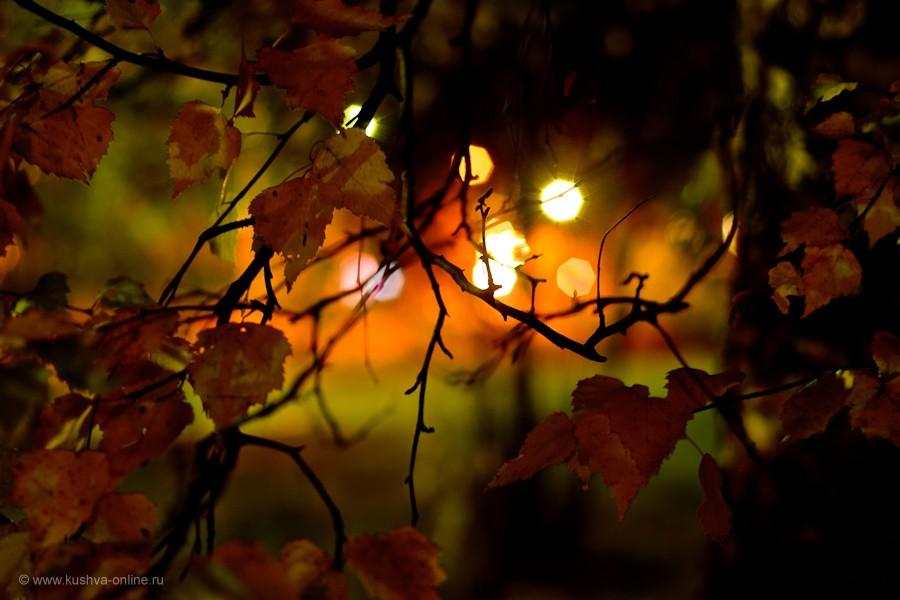 Фото дня от 8 октября 2011 г. г. Автор: Александр Скрябин