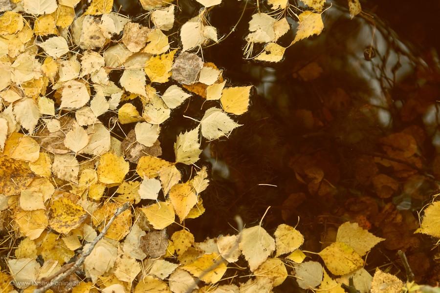 Фото дня от 9 октября 2011 г. г. Автор: Александр Скрябин