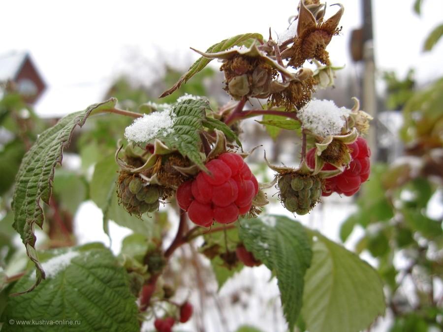 Фото дня от 2 ноября 2011 г. г. Автор: Луиза Садкова