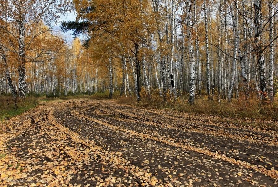 Фото дня от 19 октября 2011 г. г. Автор: Александр Меньщиков