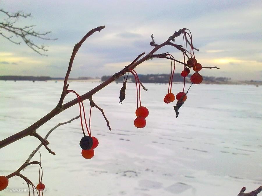 Фото дня от 20 ноября 2011 г. г. Автор: Александр Меньщиков