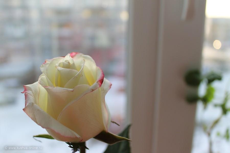 Фото дня от 15 января 2012 г. г. Автор: Оксана Сединкина
