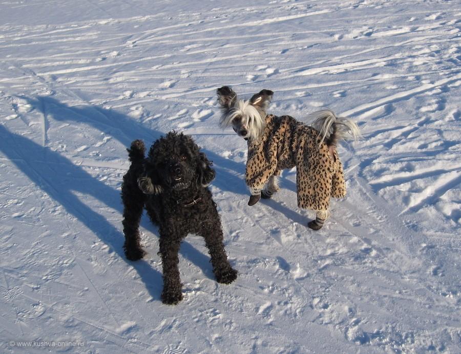 Фото дня от 4 февраля 2012 г. г. Автор: Луиза Садкова
