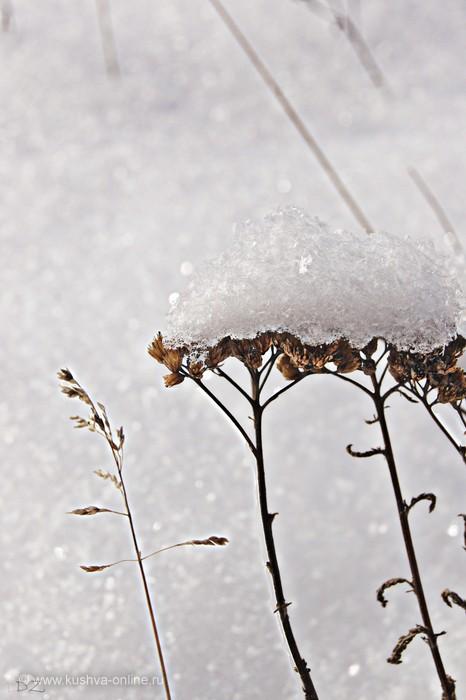 Фото дня от 10 февраля 2012 г. г. Автор: Даша Зырянова