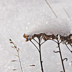 Снежная пенка. © Даша Зырянова