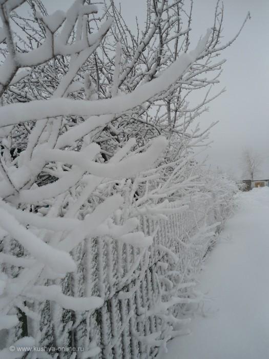 Фото дня от 19 февраля 2012 г. г. Автор: Funny Fancy
