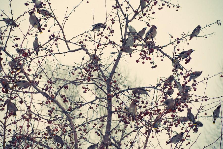 Фото дня от 22 марта 2012 г. г. Автор: Александр Скрябин