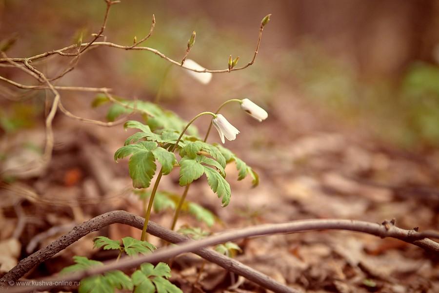 Фото дня от 2 мая 2012 г. г. Автор: Александр Скрябин