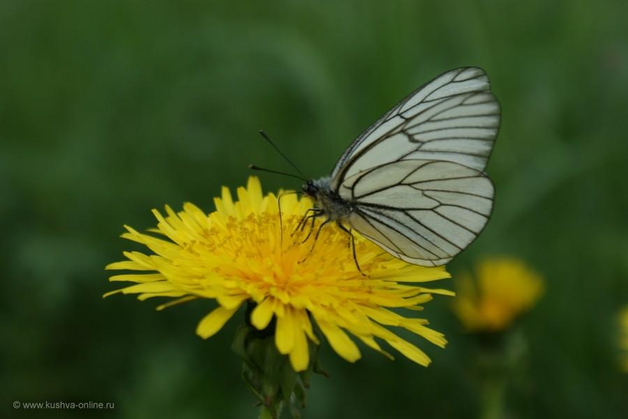 Фото дня от 31 мая 2012 г. г. Автор: Елена Строганова