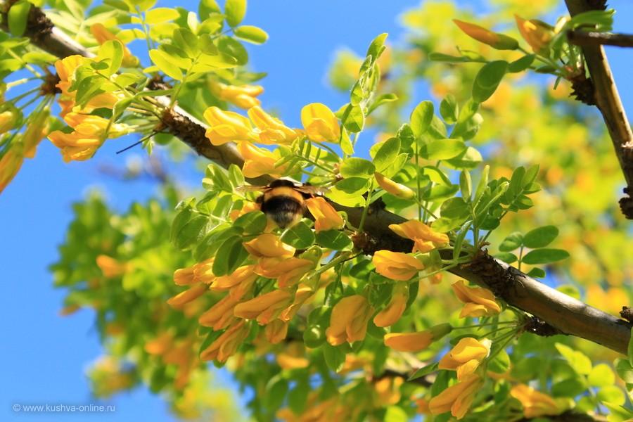 Фото дня от 28 мая 2012 г. г. Автор: Оксана Сединкина