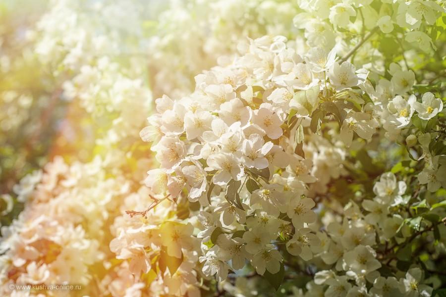 Фото дня от 22 мая 2012 г. г. Автор: Александр Скрябин