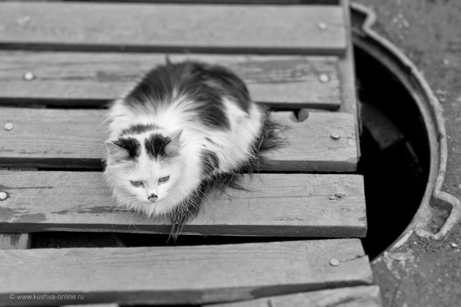Фото дня от 5 мая 2012 г. г. Автор: Александр Скрябин