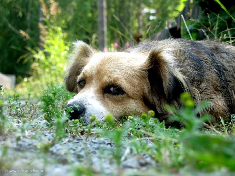 Фото дня от 31 июля 2012 г. г. Автор: Эльвира Файзутдинова