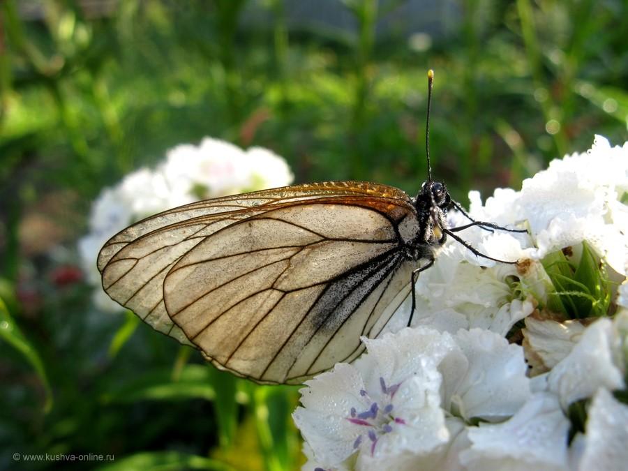 Фото дня от 7 июля 2012 г. г. Автор: Эльвира Файзутдинова