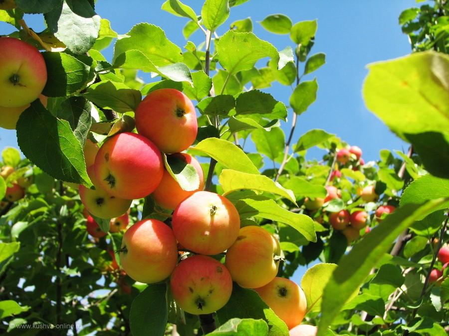 Фото дня от 17 августа 2012 г. г. Автор: tuman