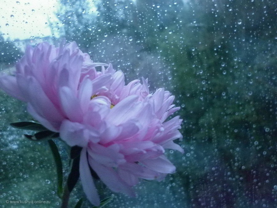 Фото дня от 19 августа 2012 г. г. Автор: mariia