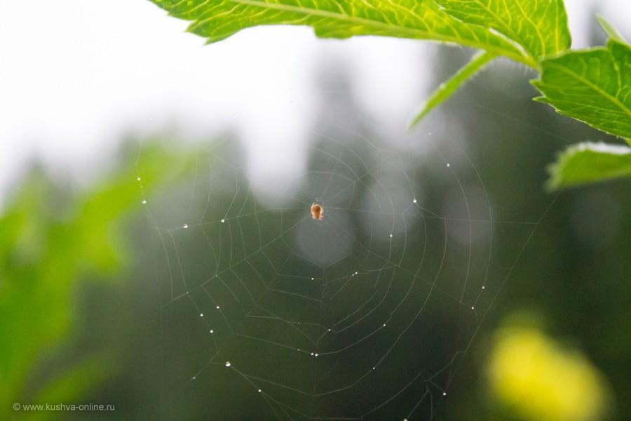Фото дня от 30 августа 2012 г. г. Автор: Оксана Сединкина