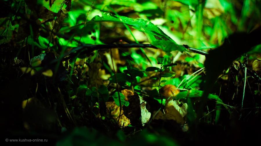 Фото дня от 6 сентября 2012 г. г. Автор: Frostbite