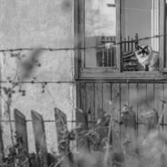 Начитанный котэ. © Александр Скрябин