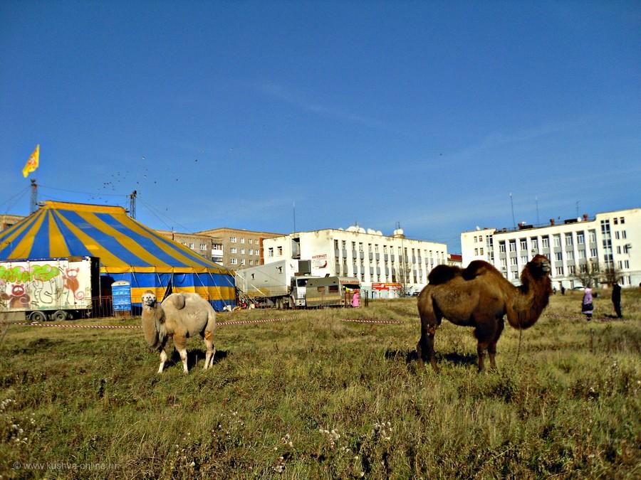 Фото дня от 7 ноября 2012 г. г. Автор: tuman