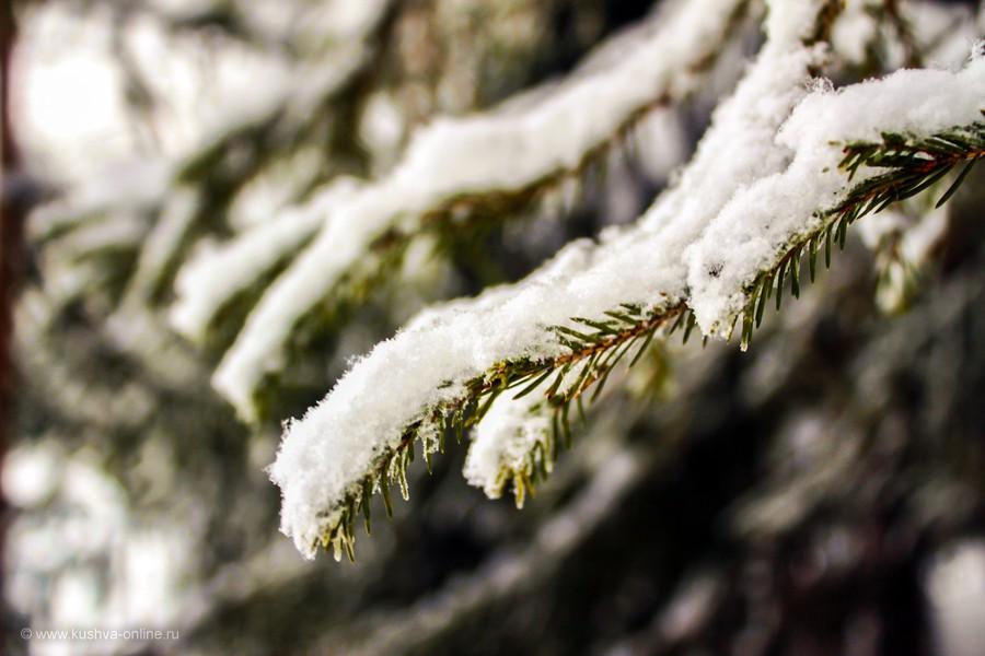 Фото дня от 12 декабря 2012 г. г. Автор: Оксана Сединкина