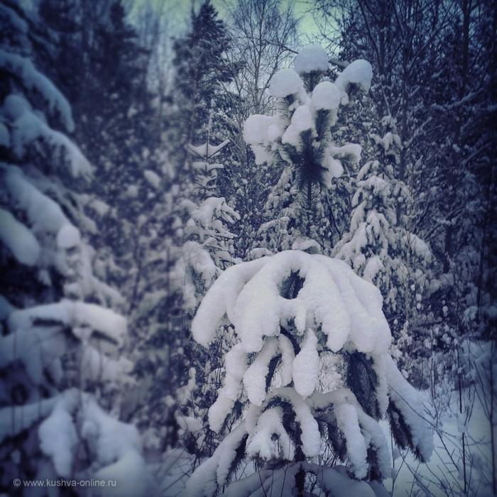 Фото дня от 9 января 2013 г. г. Автор: Андрей Шелухин