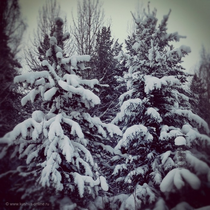 Фото дня от 13 января 2013 г. г. Автор: Андрей Шелухин