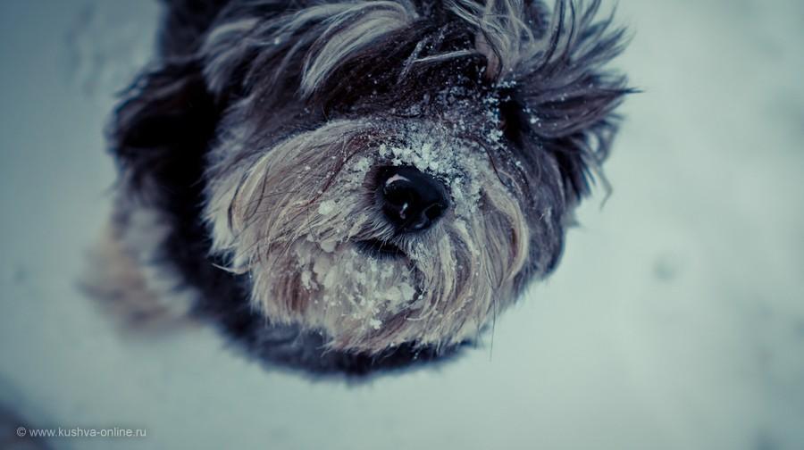 Фото дня от 16 января 2013 г. г. Автор: Frostbite