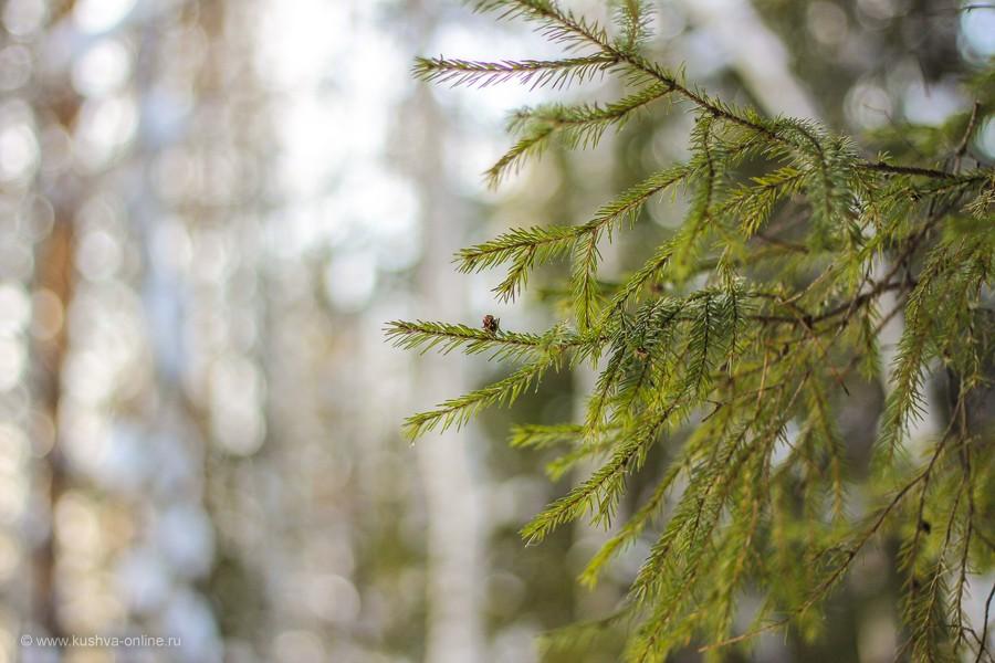 Фото дня от 2 февраля 2013 г. г. Автор: Оксана Сединкина