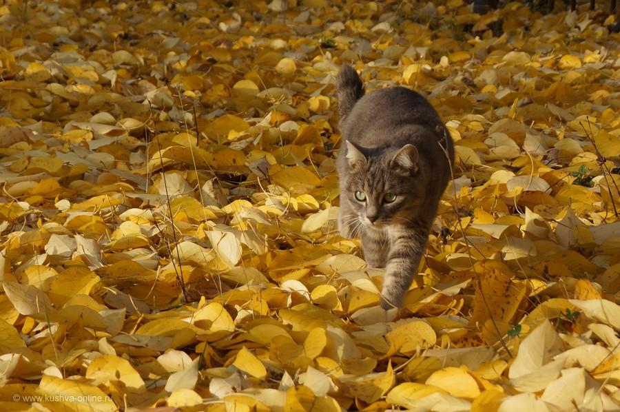 Фото дня от 16 октября 2013 г. г. Автор: Елена Строганова