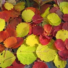 яркие краски осени! © Луиза Садкова