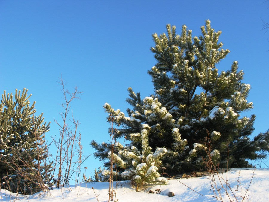 Фото дня от 5 декабря 2013 г. г. Автор: Эльвира Файзутдинова